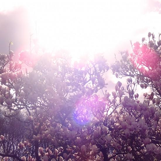 Cathrin Gressieker magnoliaDSC06809-square