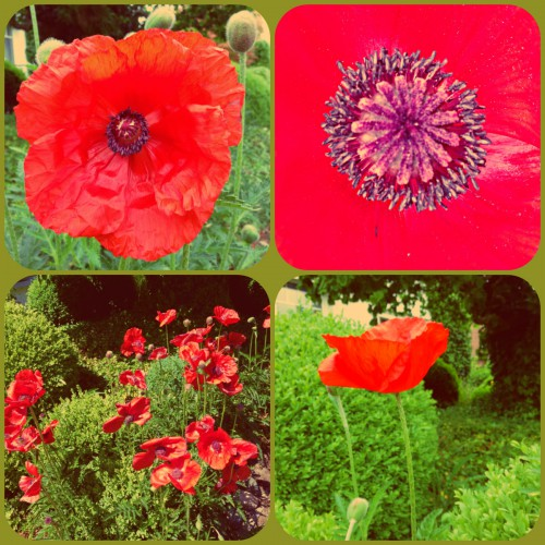Cathrin Gressieker_poppies collage