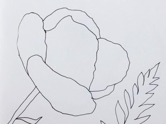 Cathrin Gressieker_poppy sketch2_IMG_0429-k