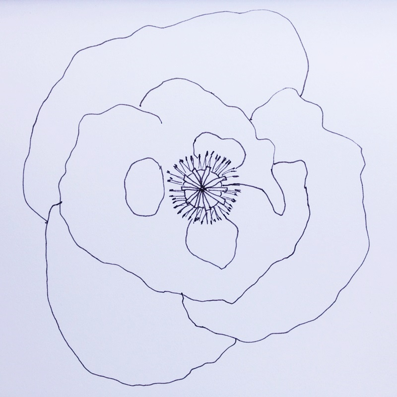 Cathrin Gressieker_poppy sketch_IMG_0427-k