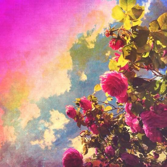 Cathrin-Gressieker-_roses2