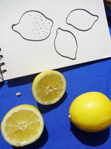 Cathrin Gressieker_lemon sketches_DSC06994-k
