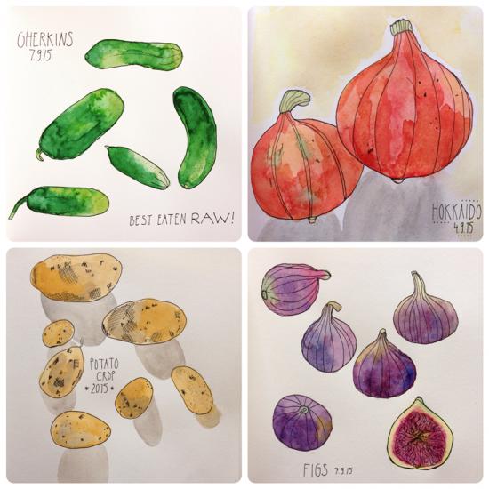 Cathrin Gressieker - September harvest sketches
