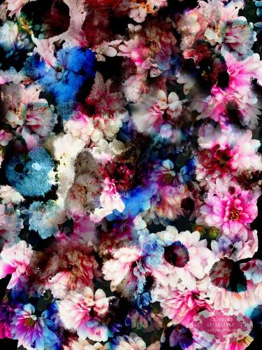 Cathrin Gressieker_Flora Translucens1