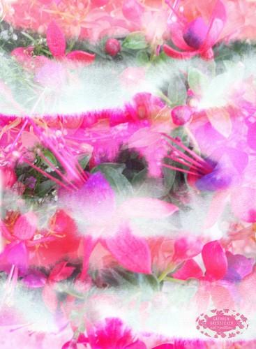 Cathrin Gressieker_Flora Translucens2